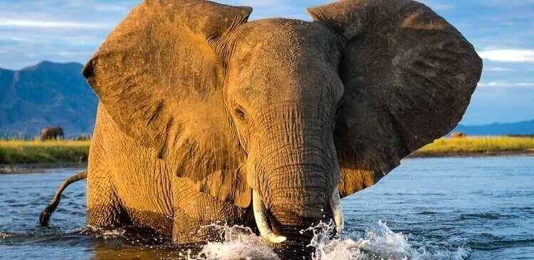 4 Of The Best Wilderness Areas In Zimbabwe
