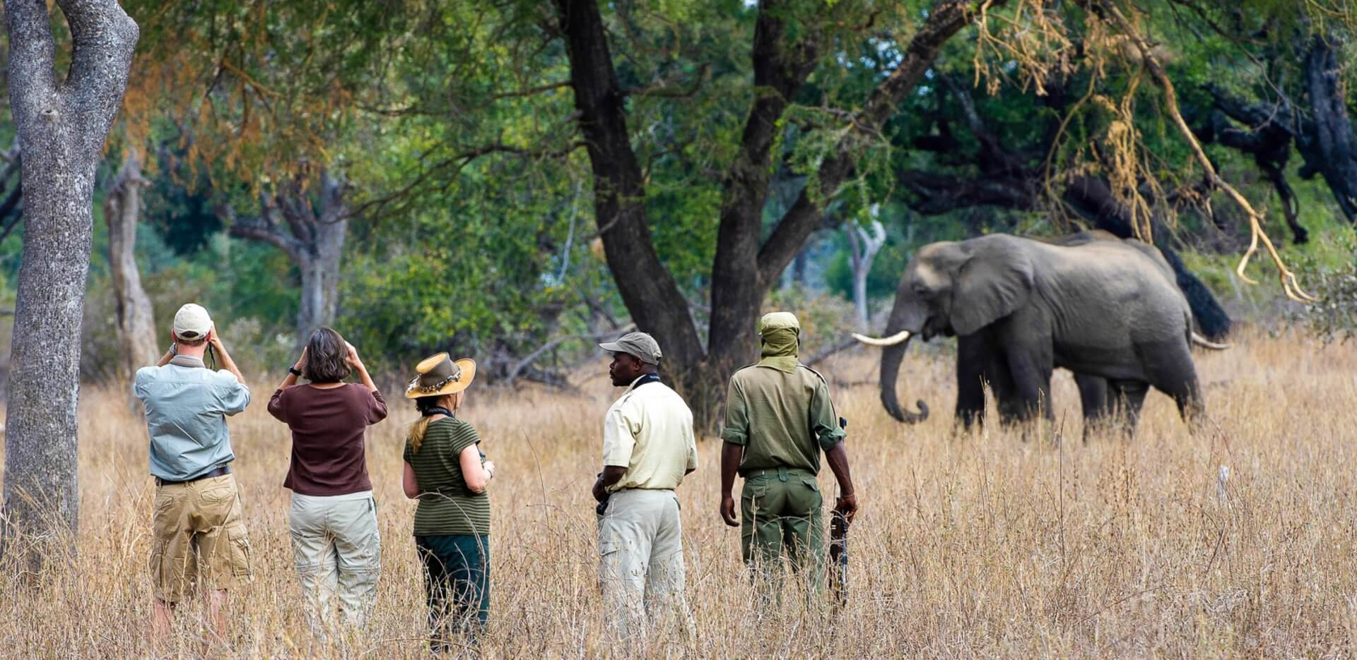 Exciting Zambia Safari Holiday Special Offers