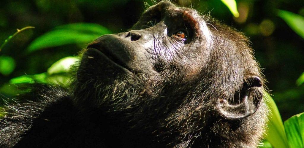 Chinko Wildlife Refuge Central African Republic
