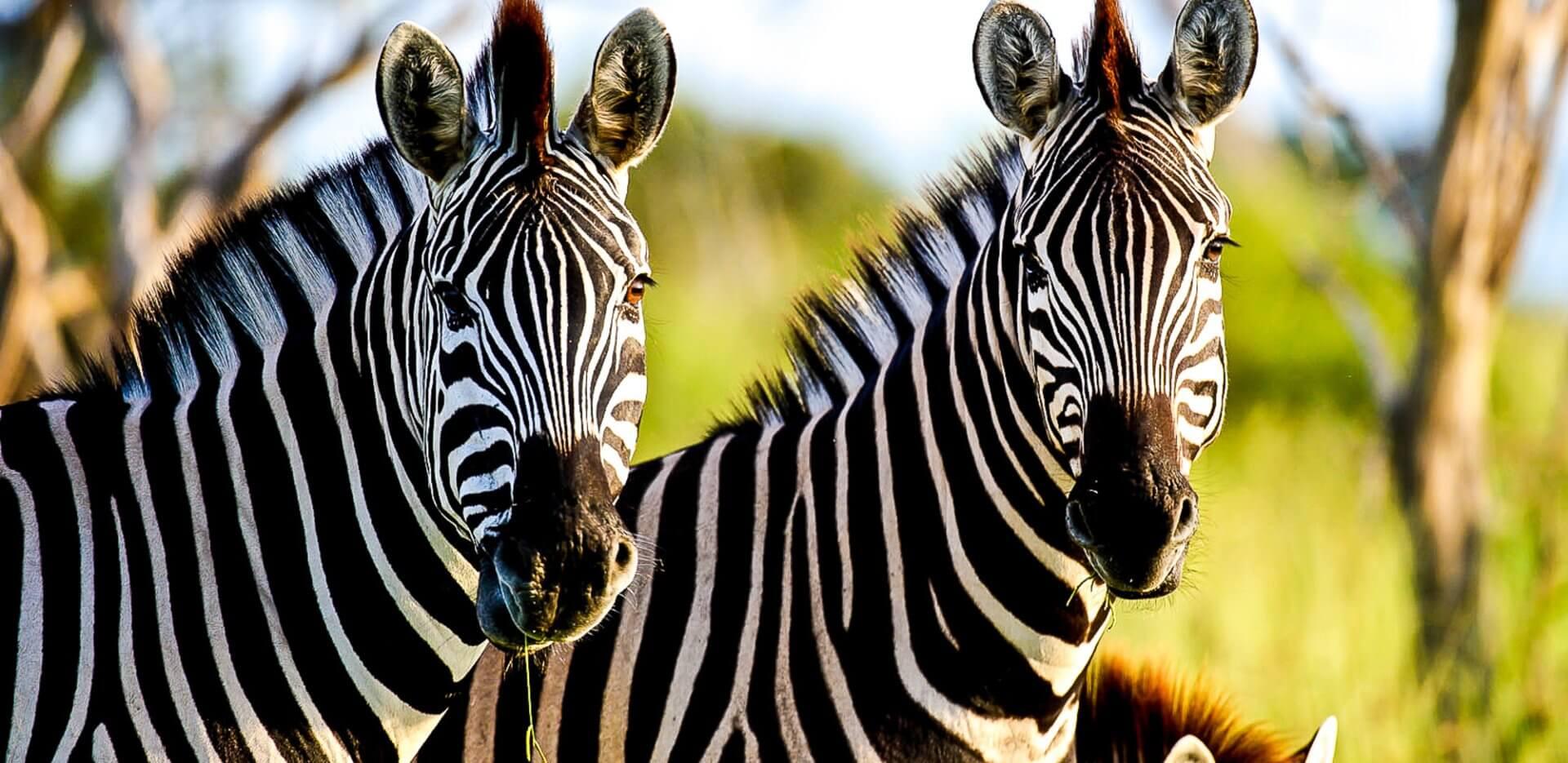Chitabe Concession Botswana