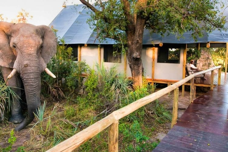 Chitabe Lediba Botswana