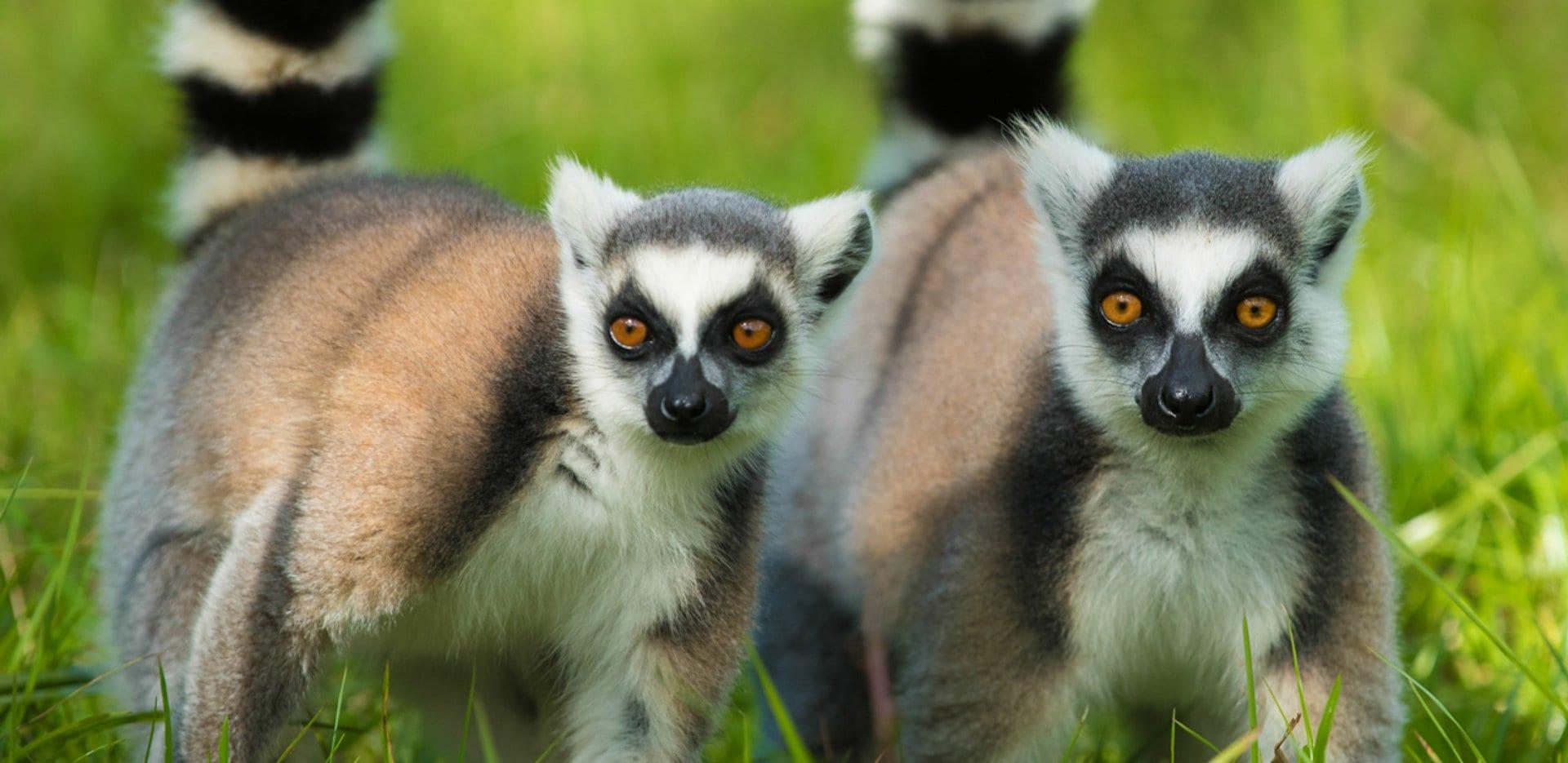 Eastern Madagascar