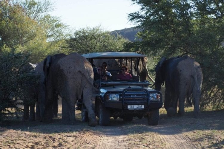 Close encounter with Elephants at Sanbona Wildlife Reserve