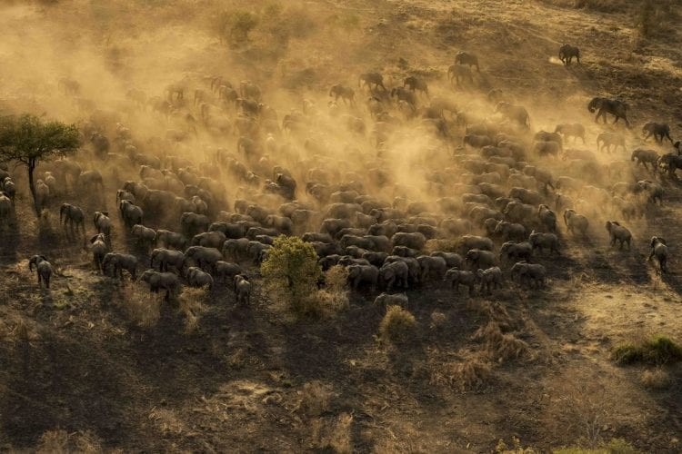 Elephants at Zakouma National Park_African Parks