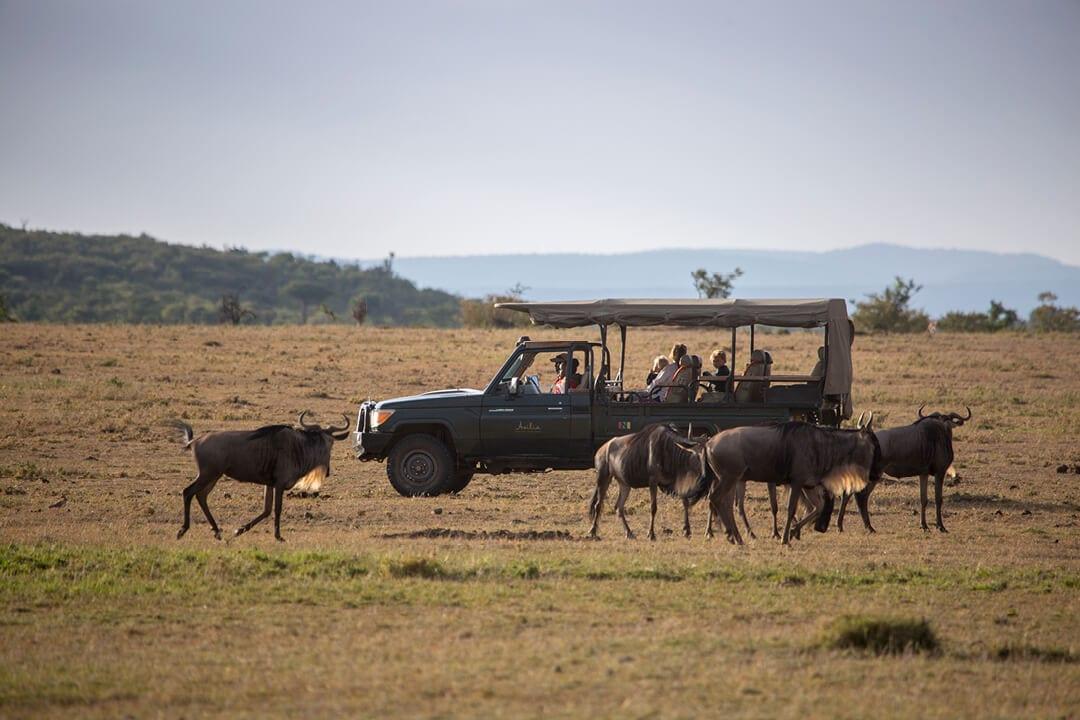 Encounter Mara Game Drives