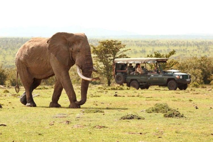 Encounter Mara for a Big Five Experience