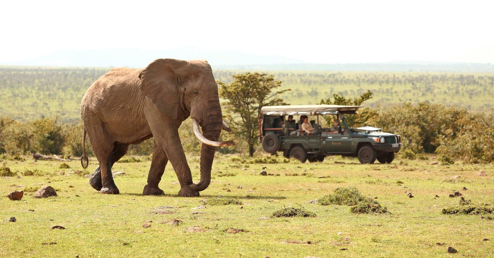 Encounter Mara for a Big Five Experience