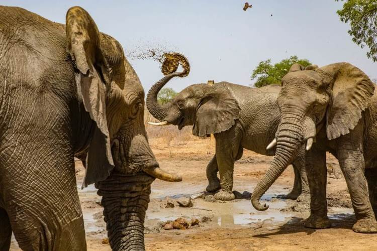 From Tragedy to Sanctuary Zakouma National Park's Elephants