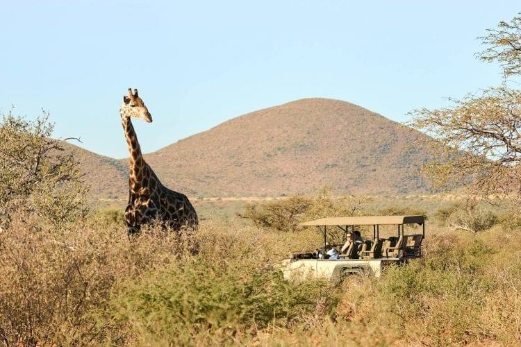 Game drive safaris at Tswalu