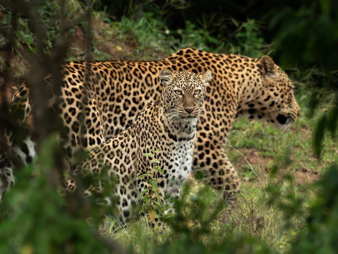 Incredible Wildlife Images from Magashi Rwanda