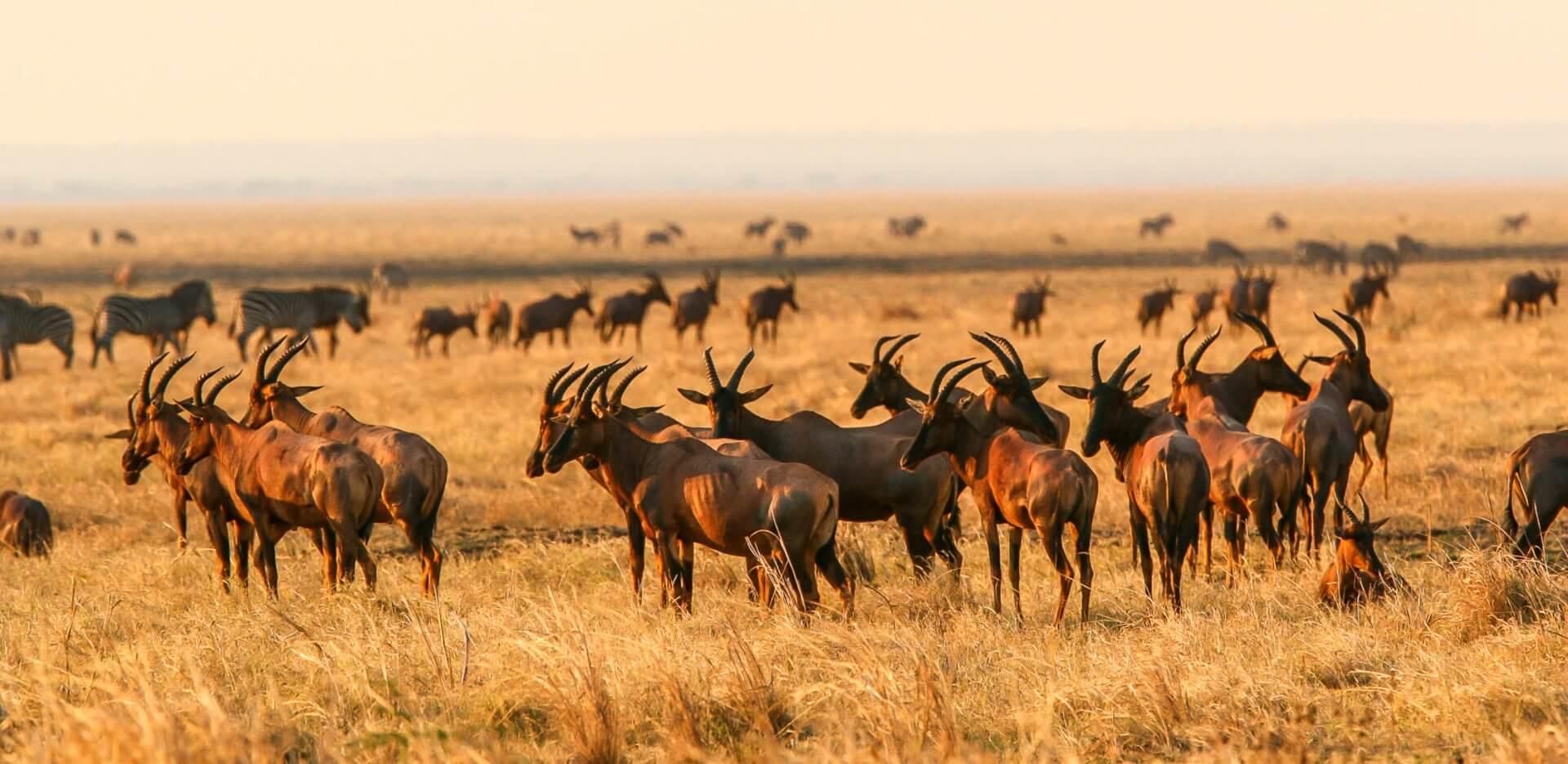 Katavi National Park Tanzania