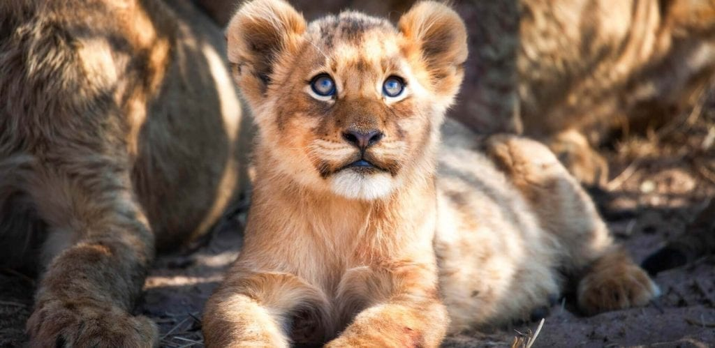 Kruger National Park & Private Game Reserves