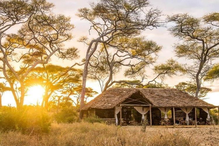Kuro Tarangire Tanzania