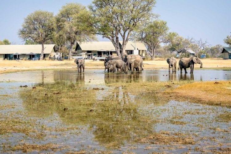Linkwasha Camp Zimbabwe