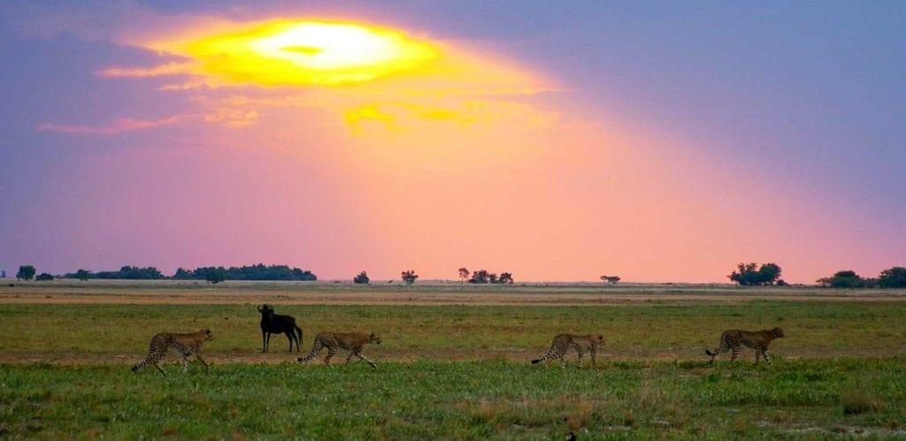 Liuwa Plain National Park Zambia
