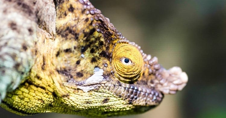Madagascar's smaller creatures like the chameleon