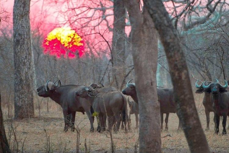 Majete Wildlife Reserve Malawi