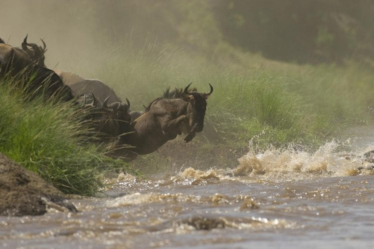 Mara Conservancies Kenya