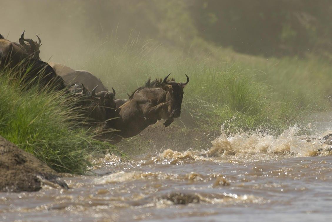 Mara Conservancies Kenya
