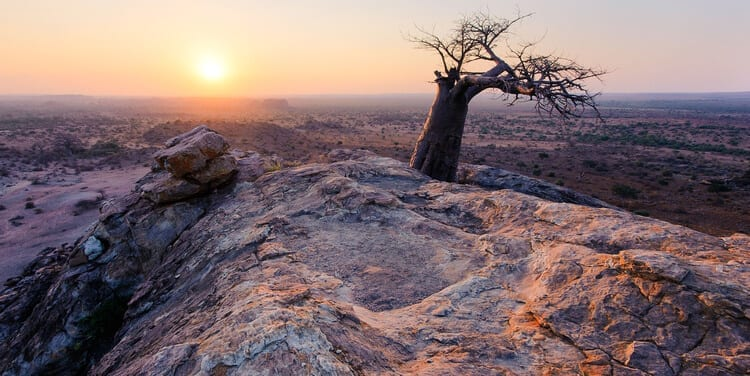 Mashatu Game Reserve Botswana – a candid review