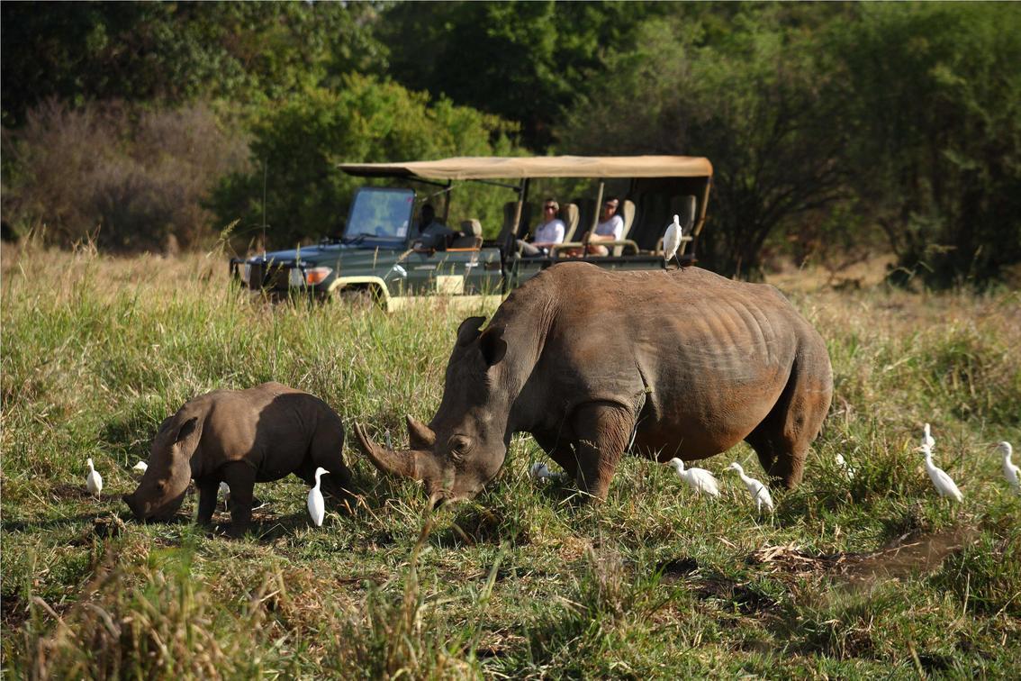 Meru National Park Kenya