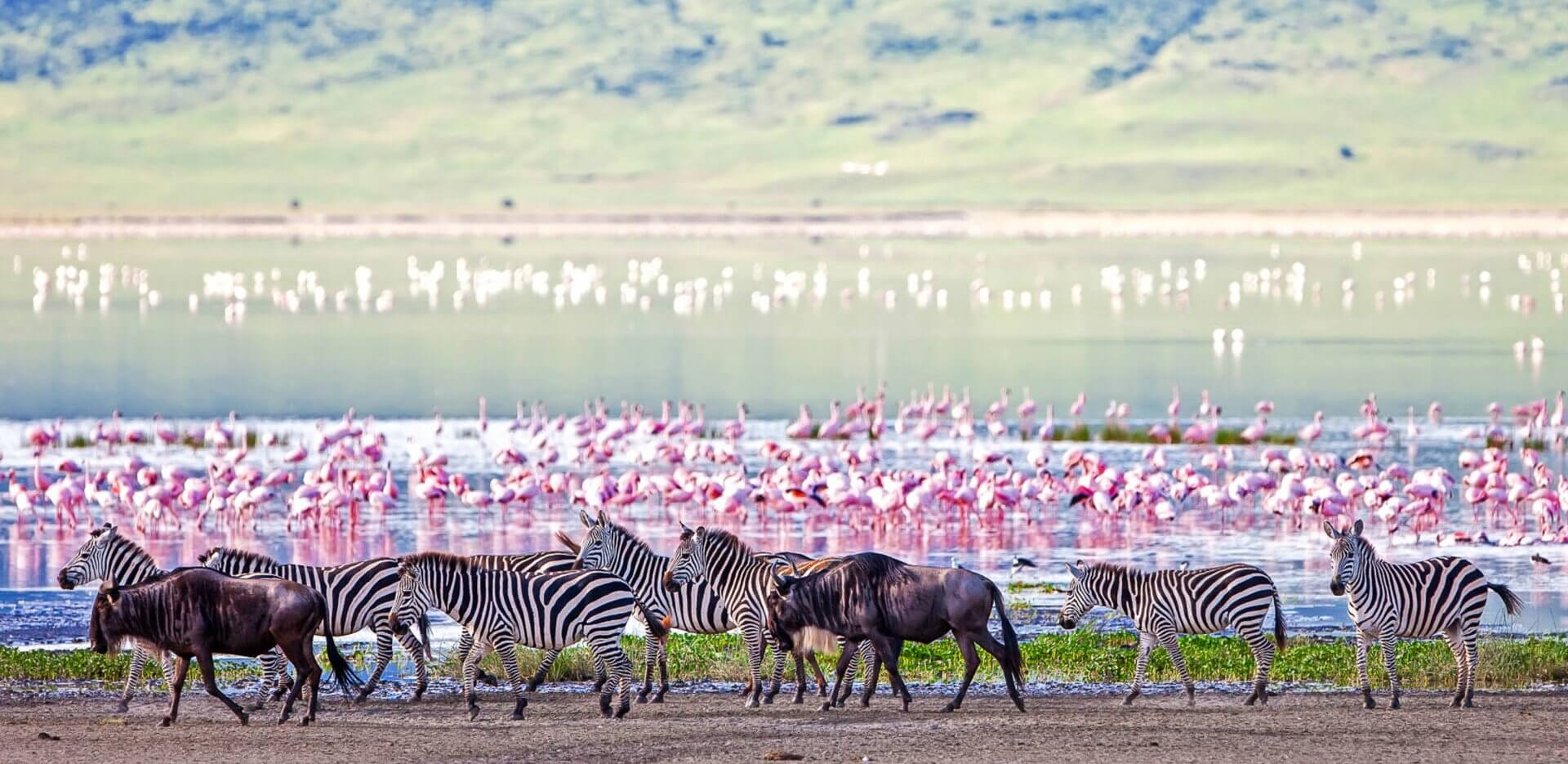 Ngorongoro Crater is one of the best places to view wildlife during April and May
