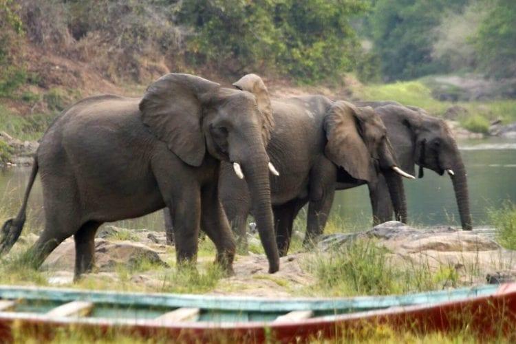 Nkhotakota Wildlife Reserve Malawi