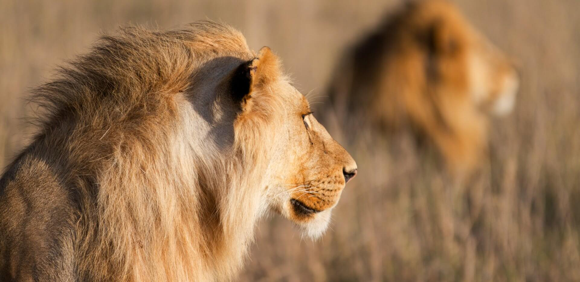 Northern Serengeti Tanzania