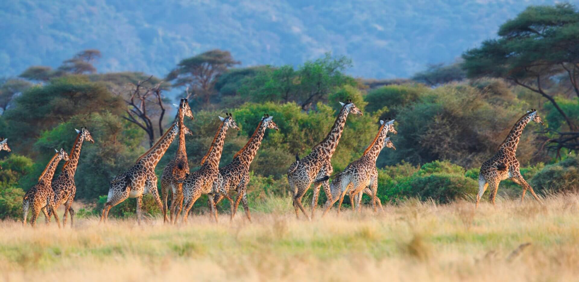 Northern Tanzania is abundant with wildlife