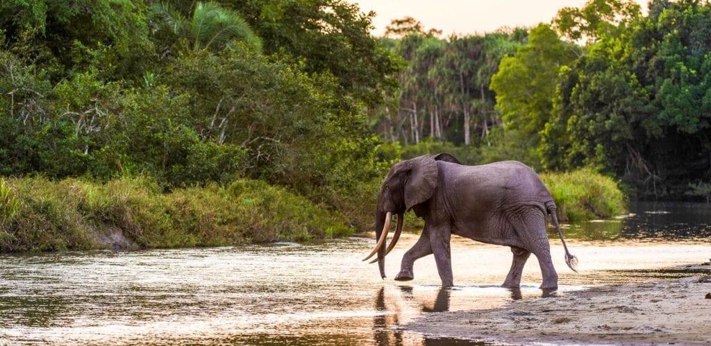 Odzala-Kokoua National Park Congo