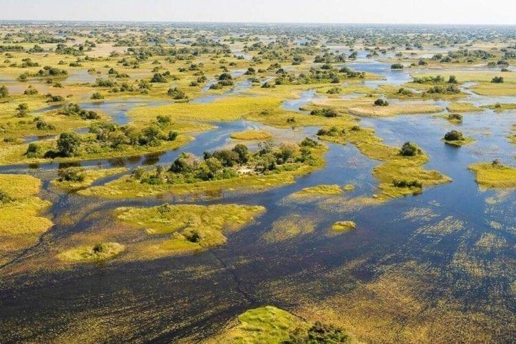 Okavango Delta Wetlands