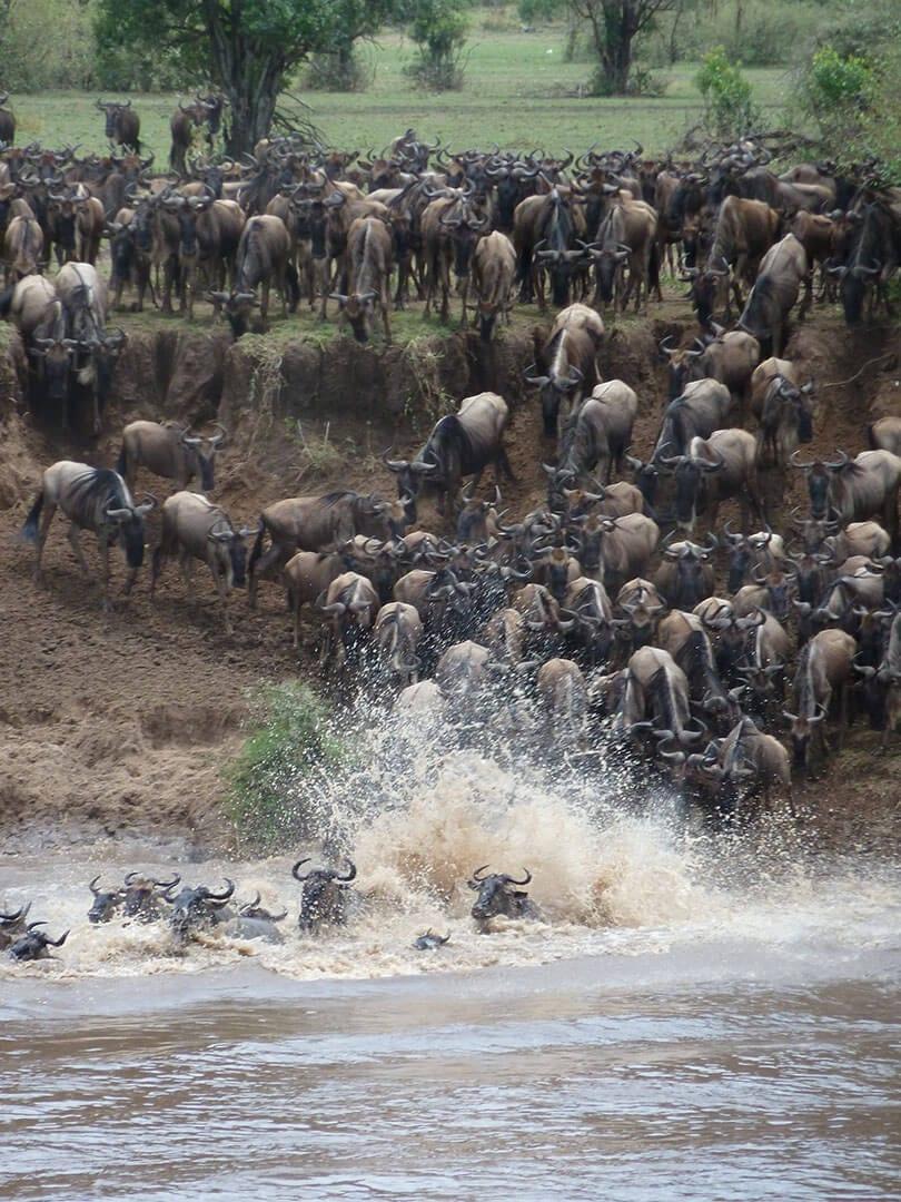 Olakira Camp Wildebeest Crossing Tanzania