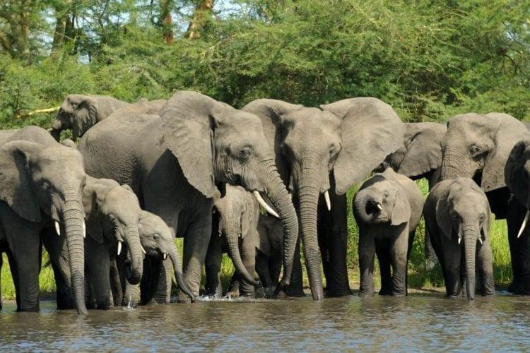 Pendjari National Park Benin