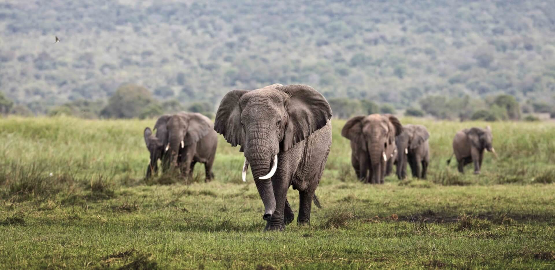 Rwanda safaris banner 2
