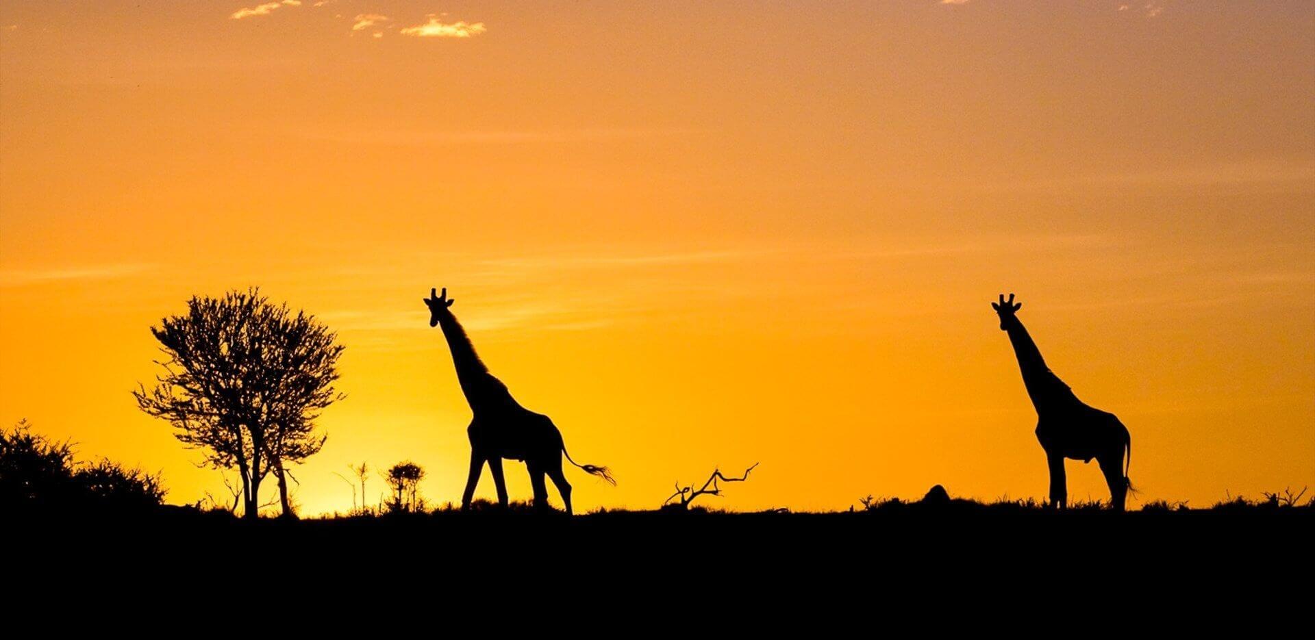 Southern Serengeti Tanzania