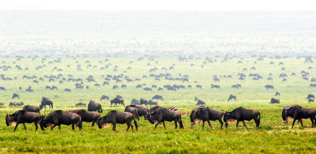 Tanzania Vacations