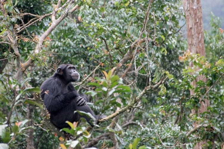 Tacugama Sierra Leone – More than a Chimpanzee Sanctuary