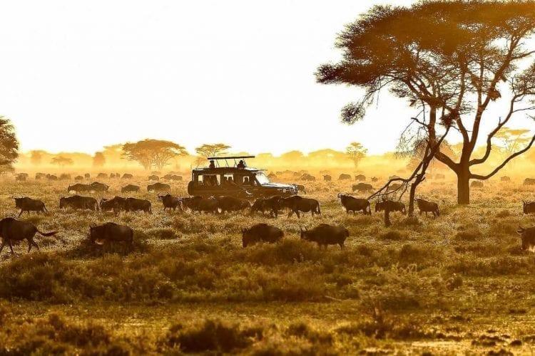 Tanzania safari banner