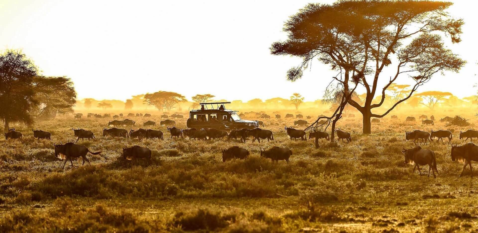 A great Tanzania Safari Holiday Experience