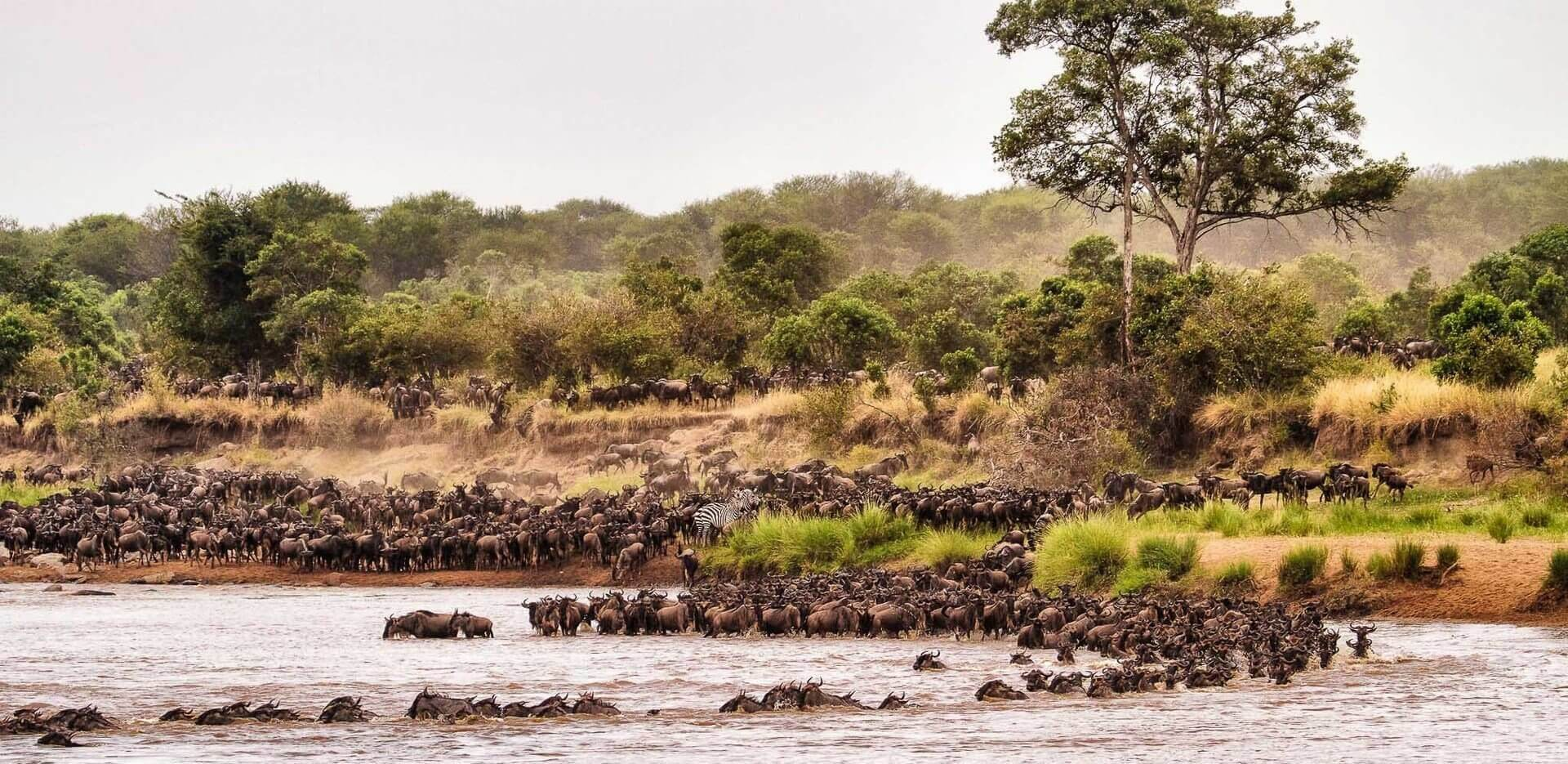 Tanzania Great Wildebeest Migration