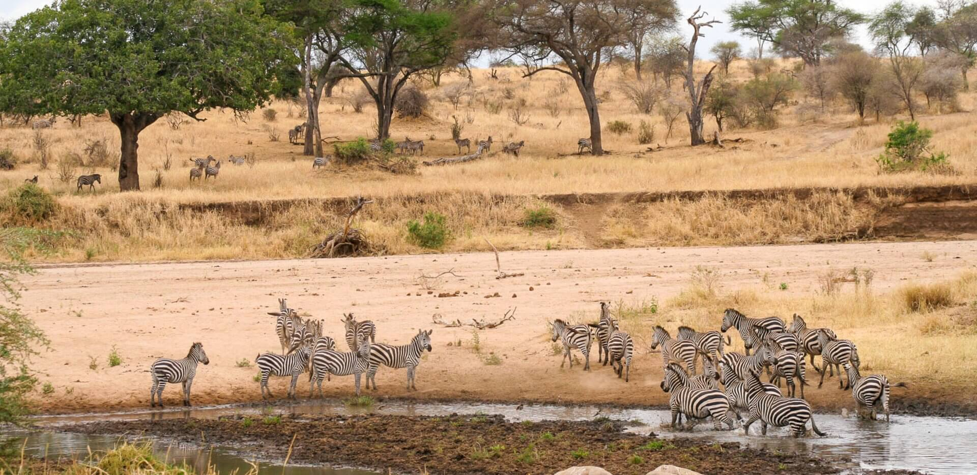 Tarangire National Park is best during the drier months