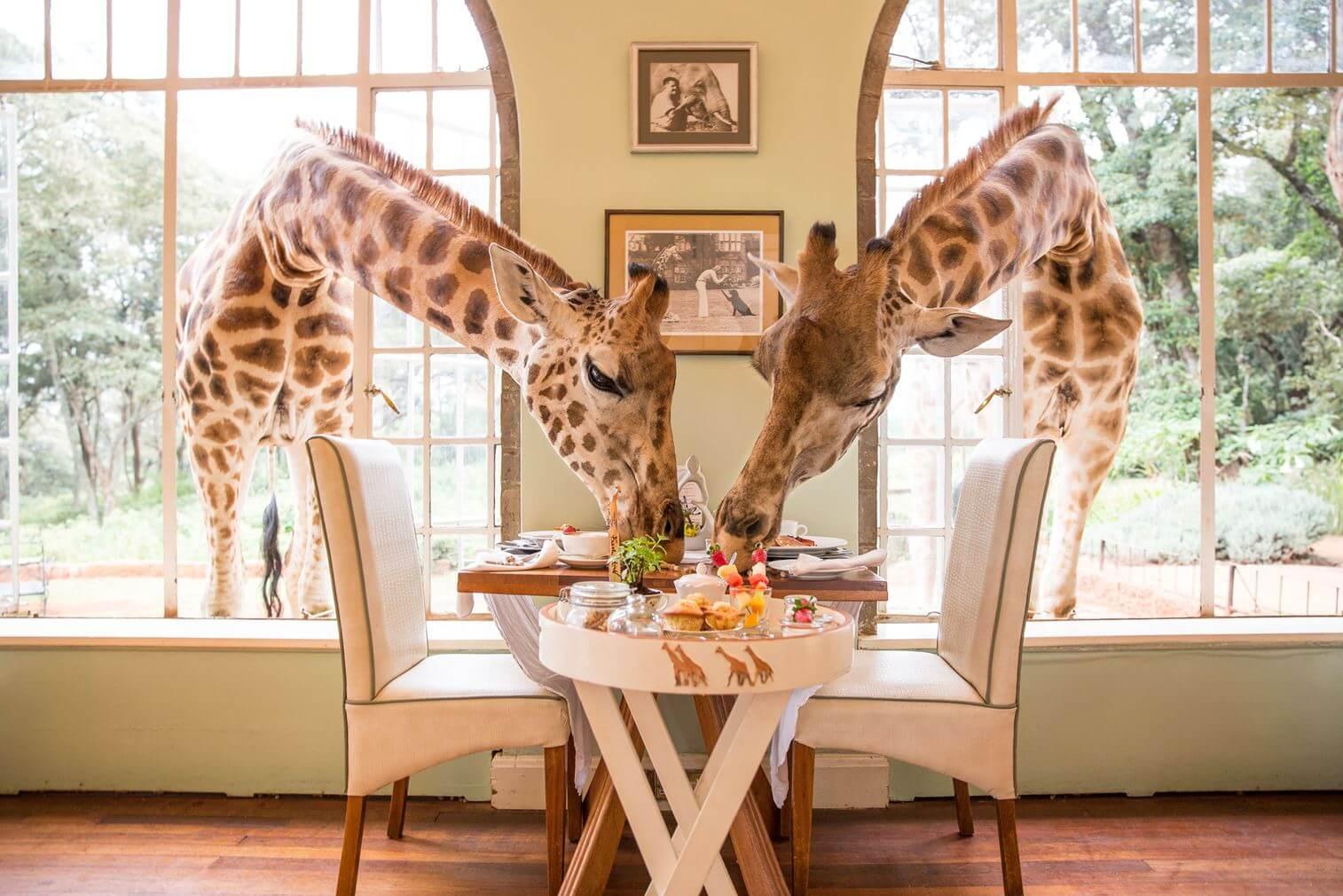 The Safari Collection Giraffe Manor Kenya