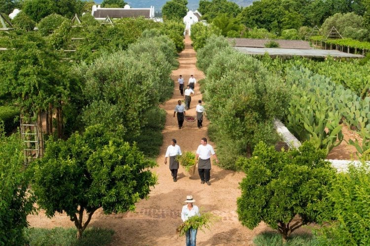 The endless gardens at Babylonstoren