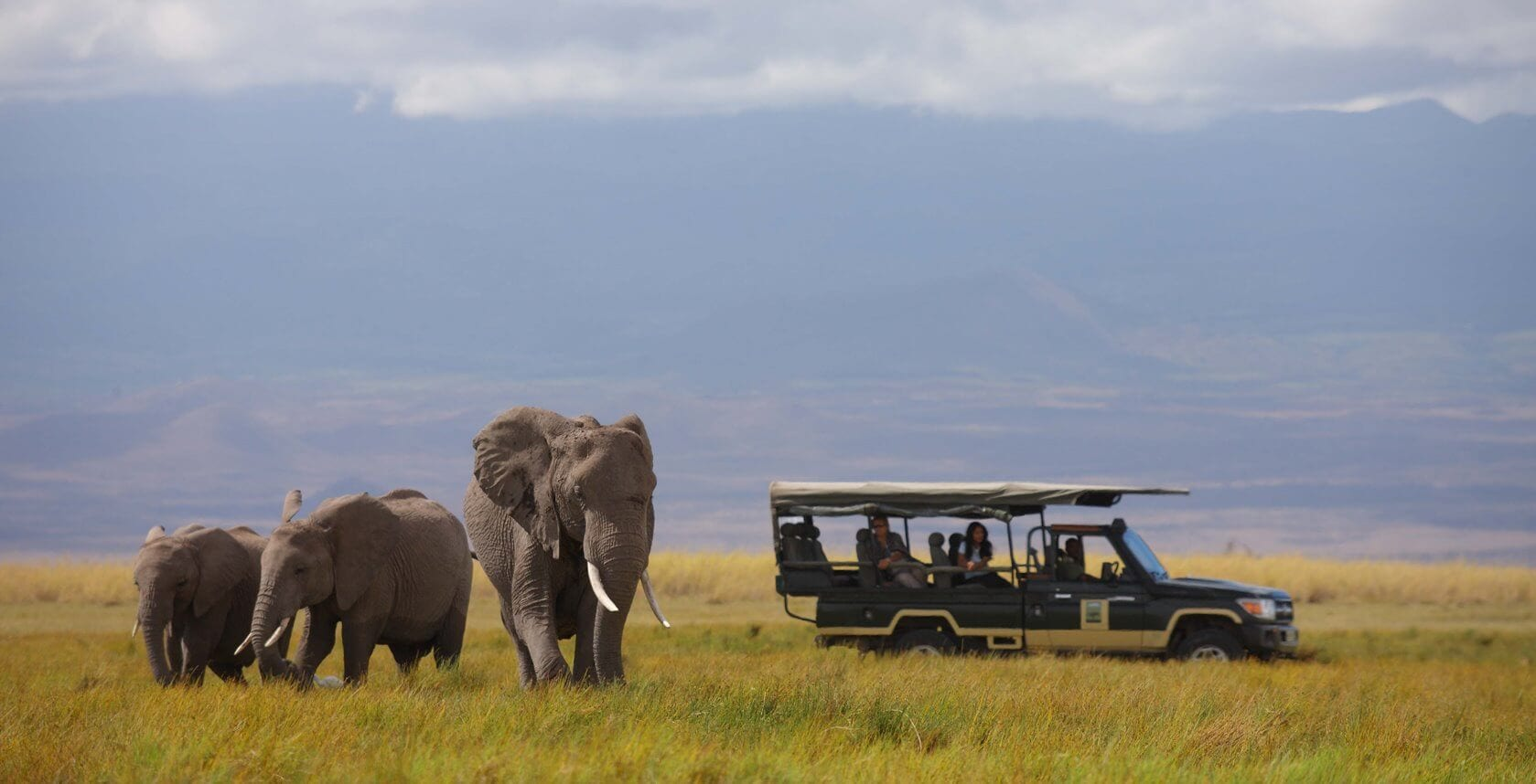 Tortilis Camp - Game Drive - Elephants1