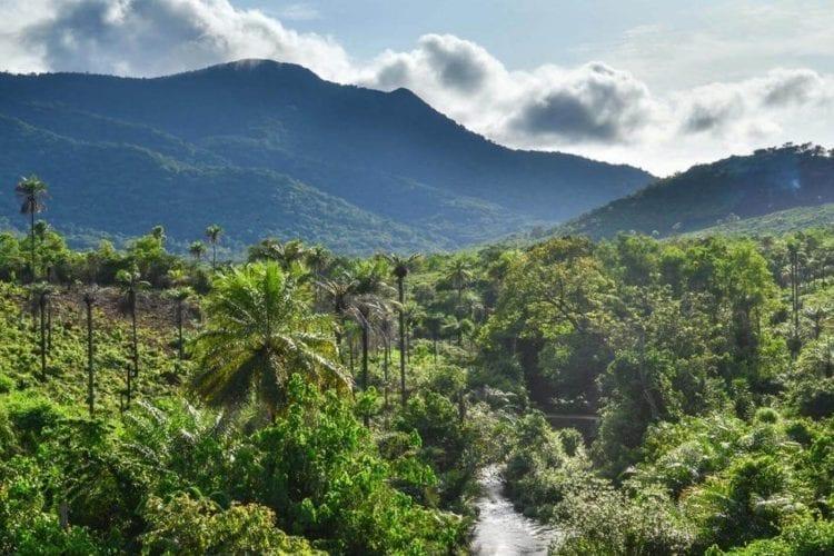Western Area Peninsula Forest Sierra Leone