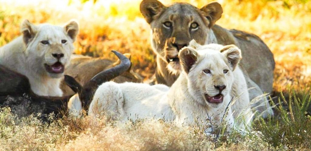 Western Cape Wildlife