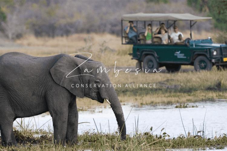 Zambesia Conservation Alliance Banner