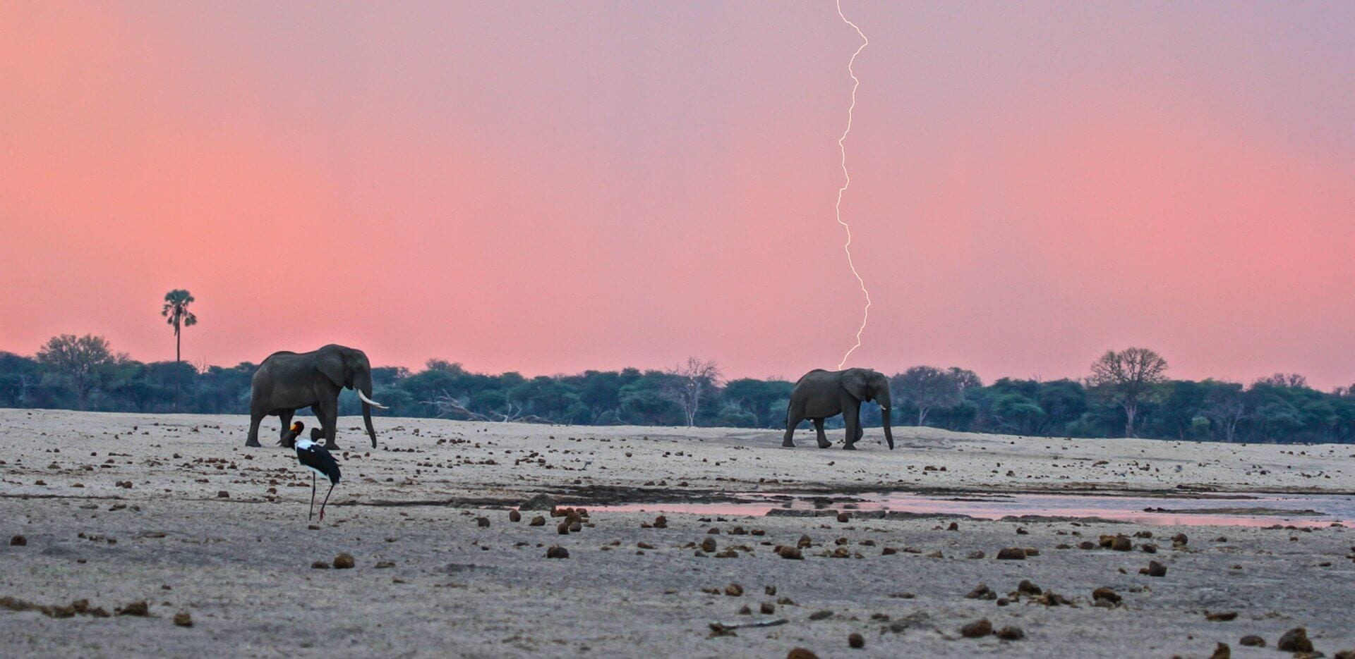 Iconic Zimbabwe Safari Special Offer
