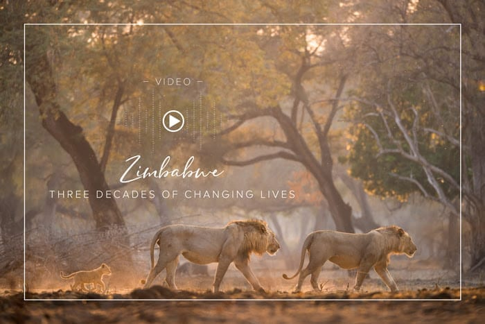 Zimbabwe Safaris - Three Decades of Changing Lives