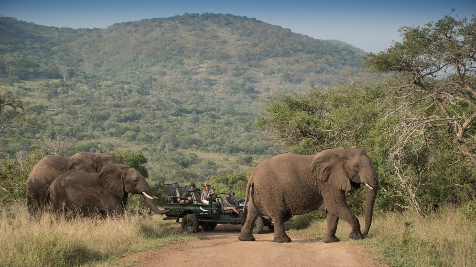 Elephants - A highlight at Phinda Vlei Lodge